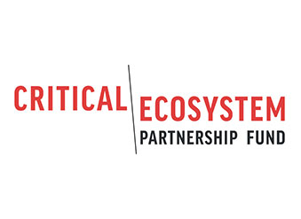 Critical Ecosystem
